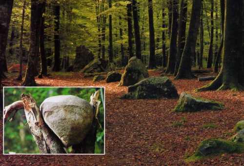 pokaini-forest